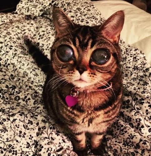 Photoshop değil gerçek uzaylı kedi!