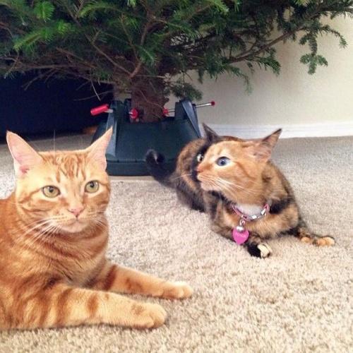 İnternetin yeni fenomen kedisi: Venüs