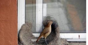 Kuşlardan Bir Mühendislik Harikası (Sırasıyla Bakınız)