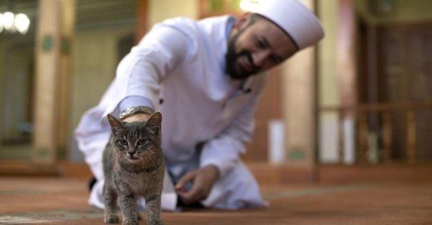 Kedi Dostu İmam Bakın Ne Yapıyor?