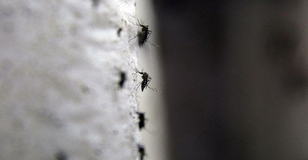 Öldürücü Zika Virüsü, Nerede Görüldü