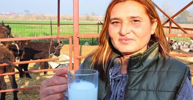 Eşek Sütü 100 Liraya Çıktı