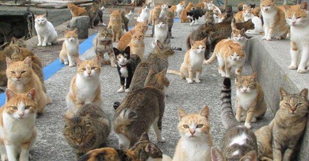 Evinde 113 Kedi Besleyen Kadın Yargılanıyor
