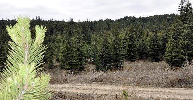 Orman Suçları 13 Senede Ne Kadar Oldu?