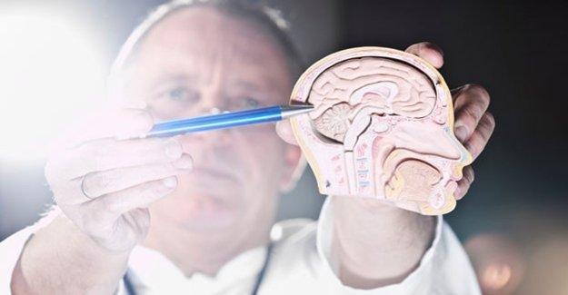 Şeker İle Ölüm Beyinde Aynı Etkiyi Yapıyor