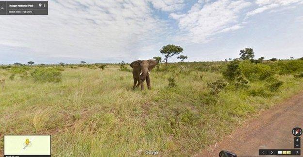 Google'dan Ücretsiz Güney Afrika Turu
