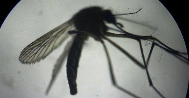 Zika Virüsü, Sanılandan Daha Korkutucu!
