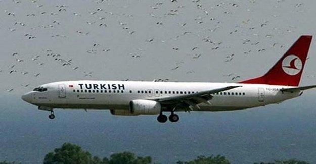 THY Uçağına Kuş Çarpınca Üç Uçak Pisti Pas Geçti