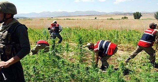 Urfa'da 6 Ton Uyuşturucu İmha Edildi