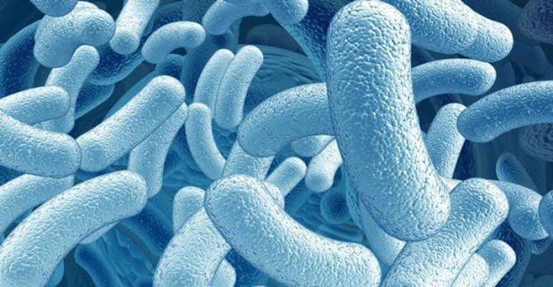 İyi Bakteriler Göğüs Kanserinden Koruyabilir