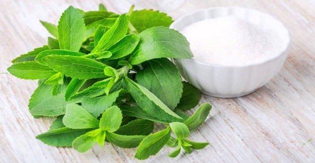 'Stevia' Şekerin Tahtını Sallıyor