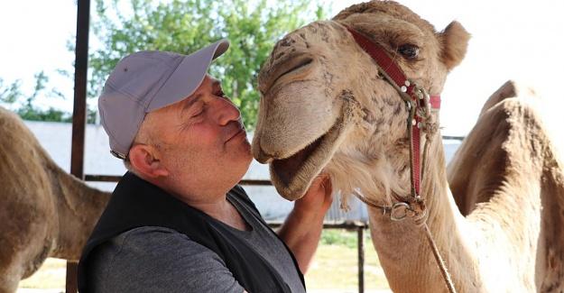 Koronavirüs deve sütüne olan talebi artırdı