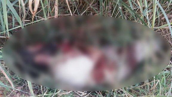 AA IŞİD'linin ceset fotoğrafını yayınladı