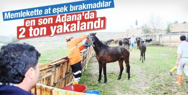 Adana'da 2 ton at eti ele geçirildi