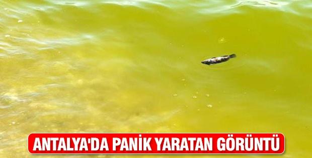Antalya'da panik yaratan görüntü