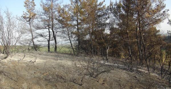 Aydın'da 4 Hektar Orman Alanı Yandı