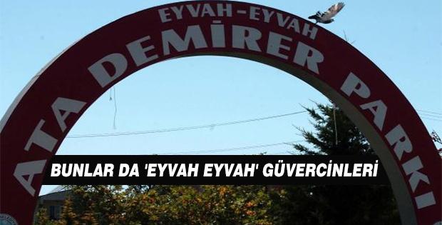 BUNLAR DA 'EYVAH EYVAH' GÜVERCİNLERİ