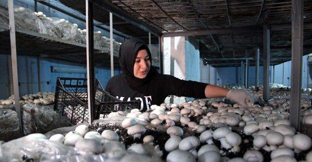 Evinde yetiştirdiği mantarlardan 60 bin lira kazanıyor