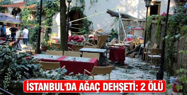 İstanbul'da ağaç dehşeti: 2 ölü