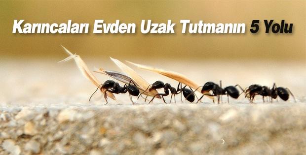 Karıncaları Evden Uzak Tutmanın 5 Yolu