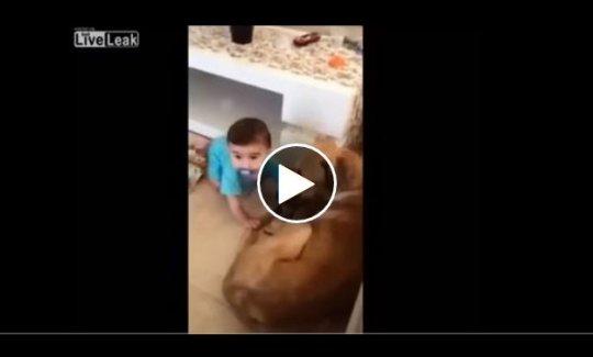 Köpek bebeğe böyle saldırdı! İZLE
