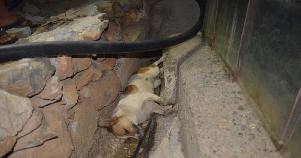 Mersin'de Kedi Ve Köpekleri Zehirlediler