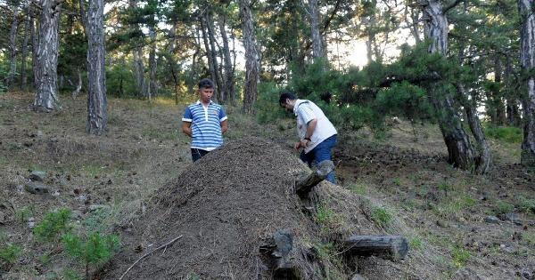 Ormana Karıncalı Koruma