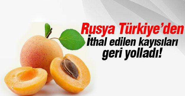 Rusya Türkiye'den ithal edilen kayısıları geri yolladı!