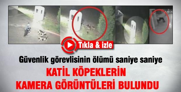 Silivri'deki katil köpeklerin kamera görüntüsü bulundu