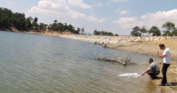 Simav'daki Göletlere 32 Bin Yavru Sazan Bırakıldı