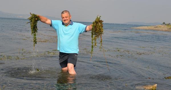 Suyu Çekilen Sapanca Gölü'nü Yosun Kapladı