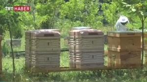 Sokmayan arı yetiştirdiler!